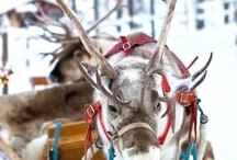 GOTTA LUV CHRISTMAS DECORATING!