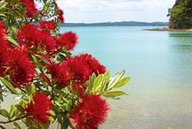 Painting ideas - Pohutukawa Coast