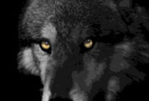 """Home decor - Wildlife / Watercolor, digital and photographic images of wildlife painted by Susie """"Sami"""" Myers.  Wildlife includes wolves, birds of prey, birds, bears, and more"""