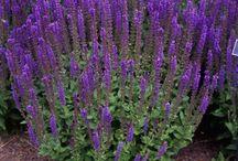 Scrubs, flowers & bushes / Voor in de tuin