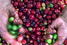 Cafés Descafeinados / Elaborados a través de procedimientos naturales para la extracción de la cafeína contenida en el café, utilizando agua como medio para descafeinar.
