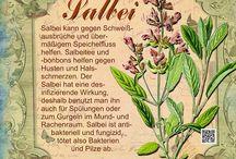 Pflanzen Zeichnungen