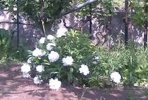 Virágok / Fényképeim
