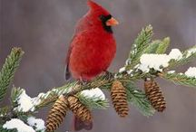 CARDINALS / IT HAS BEEN SAID THAT WHEN A CARDINAL APPEARS NEAR YOU, IT'S A SIGN THAT A LOVED ONE GONE IS REACHING OUT TO SAY I LOVE YOU