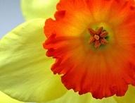 Spring / by Robin Welker