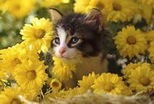 zwierzątka / kotki ipieski