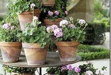 Doniczki, donice, pojemniki na kwiaty