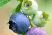 Fruit - Meyve / En güzel meyveler