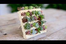 Diy mini planter boxes