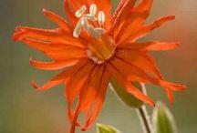 Orange flowers ♥ ✿⊱╮