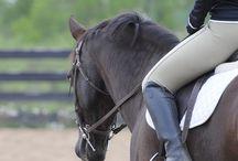 I want a horse / Horses