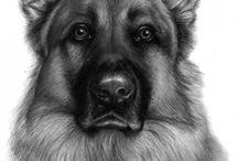 honden tekenen