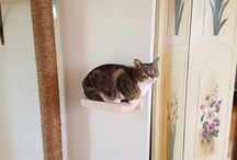 Wall Mounted Cat Trees & Shelves / When space is limited, our Wall Mounted Cat Trees and Shelves are a perfect fit!