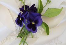 Flowers - Violets & Pansies
