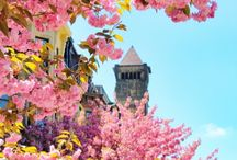 Springtime in Massachusetts / Fun things to do in Massachusetts this spring