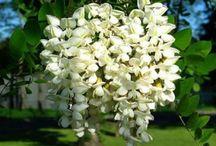 Il linguaggio dei fiori / Cosa significano i fiori. E'proprio vero che la loro bellezza rispecchia il significato?