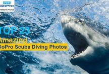 Top Amazing GoPro Scuba Diving Photos / Amazaing GoPro Scuba Diving Photos