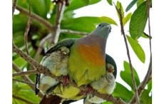 birds / by Christina Whitaker