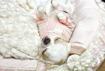 Chihuahua Love / by Shannon Ashton