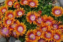 Flowerbeds / by Kathleen Hargett