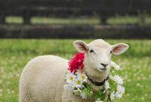 Pet farm animals!