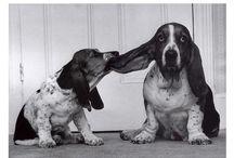 Love of Hound Dogs / by Samantha Muir