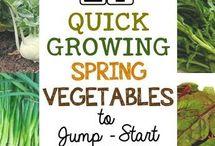 organic vedgetables
