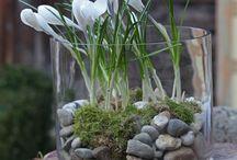 Frühling/Springtime