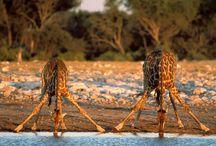Voyage Namibie / Le diamant africain