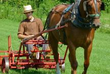 Modern Horse Drawn Vehicles and Equipments