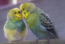 Budgies are awesome