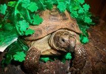 Other pet info / by Kristie Ward