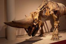 dinocollasaurus