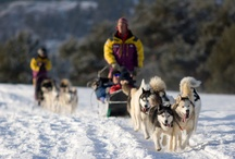 Family Friendly Breck (Winter) / Family Friendly Events and Activities for the Winter season / by Pine Ridge Condominiums