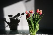 Tulips / Flowers