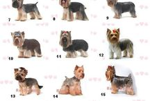 Dogs / Grooming