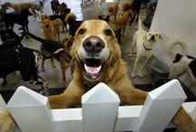 DOG DAYCARE!!!