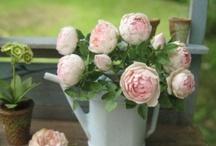 mini bloemen