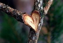Heart symbol / by Stephanie Blanc