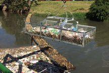Ilhas Flutuantes / Forma econômica para tratamento de rios, arroios e lagos, poluídos.