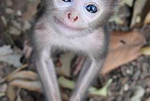 Animals, cute, beautiful......
