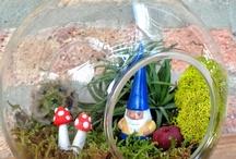 Terrarium and Garden