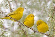 Preciosos pájaros