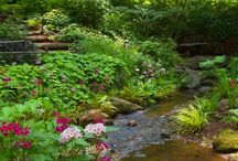 Creek in the garden