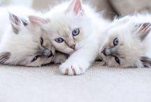 Djur / Katter som är söta