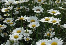 Yard/kitchen garden--flowers / by MS Bradshaw