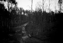 Locatie (bos, buiten, Tilburg) / Een stukje 'vergeten' bos op 5-10 min van mijn huis. Ideaal voor sfeervolle foto's.