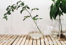 Plantenideeen