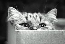 ♥boxes and cats♥