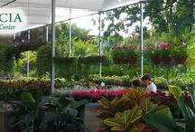 Nosso Garden Center / Nossa loja